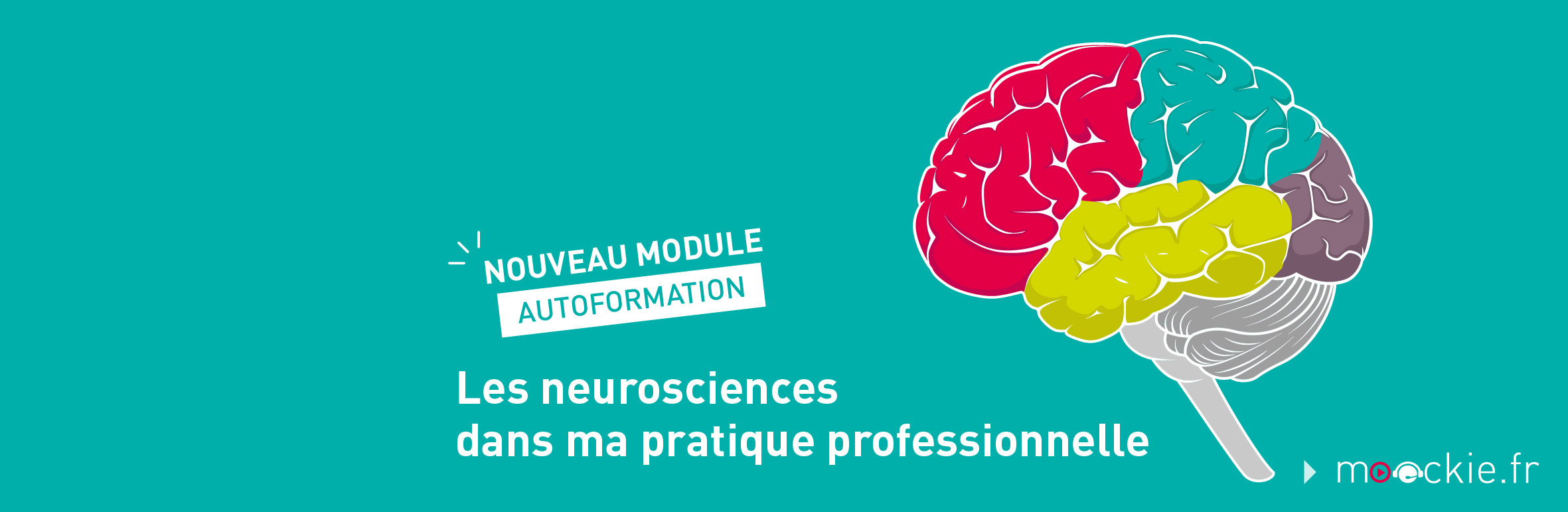 Un nouveau module sur les neurosciences pour confiner en cognition !